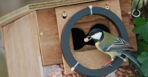 Automatic registration of birds visiting feeders