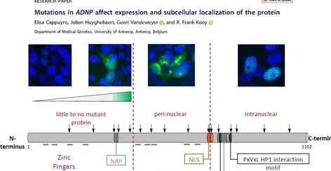 Mutations in ADNP affect expression and subcellular localization of the protein. Cell Cycle, 2018